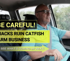 Be Careful Quacks ruin Catfish Farm Business
